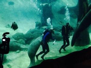 Jeremy Wade feeding the manatees