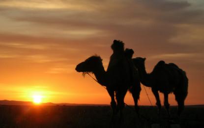 Mongolia – Call of the wild