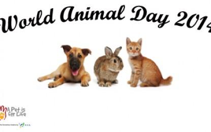 World Animal Day 2014 in Singapore