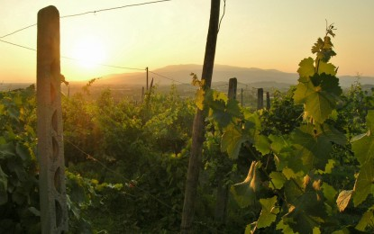 Arezzo – Far from the madding crowd