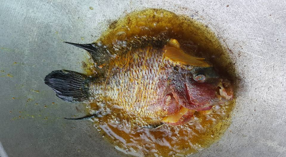 Man draws criticism online after buying $906 luohan fish to fry and eat - Alvinology