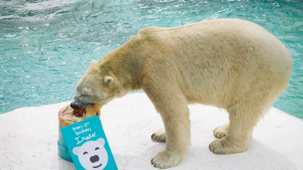 Celebrating Inuka the polar bear's life (1990 – 2018)