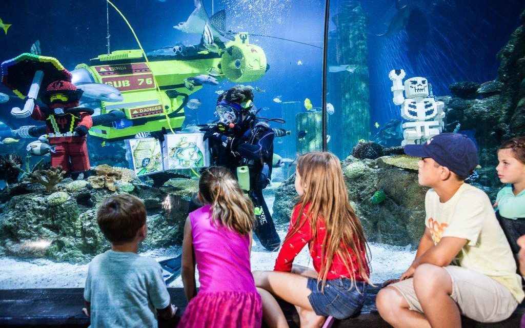 Here's a chance for your child to become SEA LIFE's Junior Ranger!
