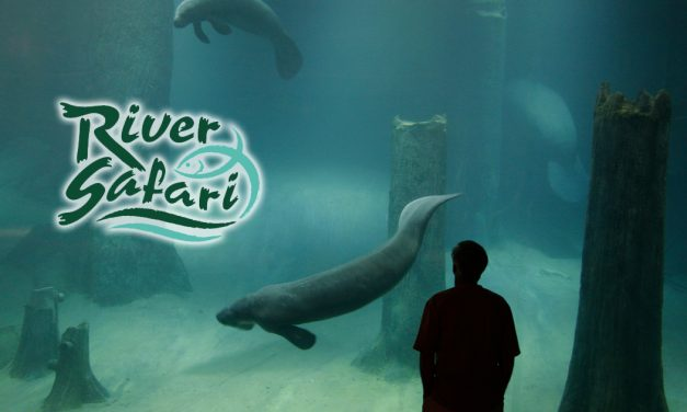 Looking for a wild Valentines Day experience? How about sleeping with Manatees at River Safari