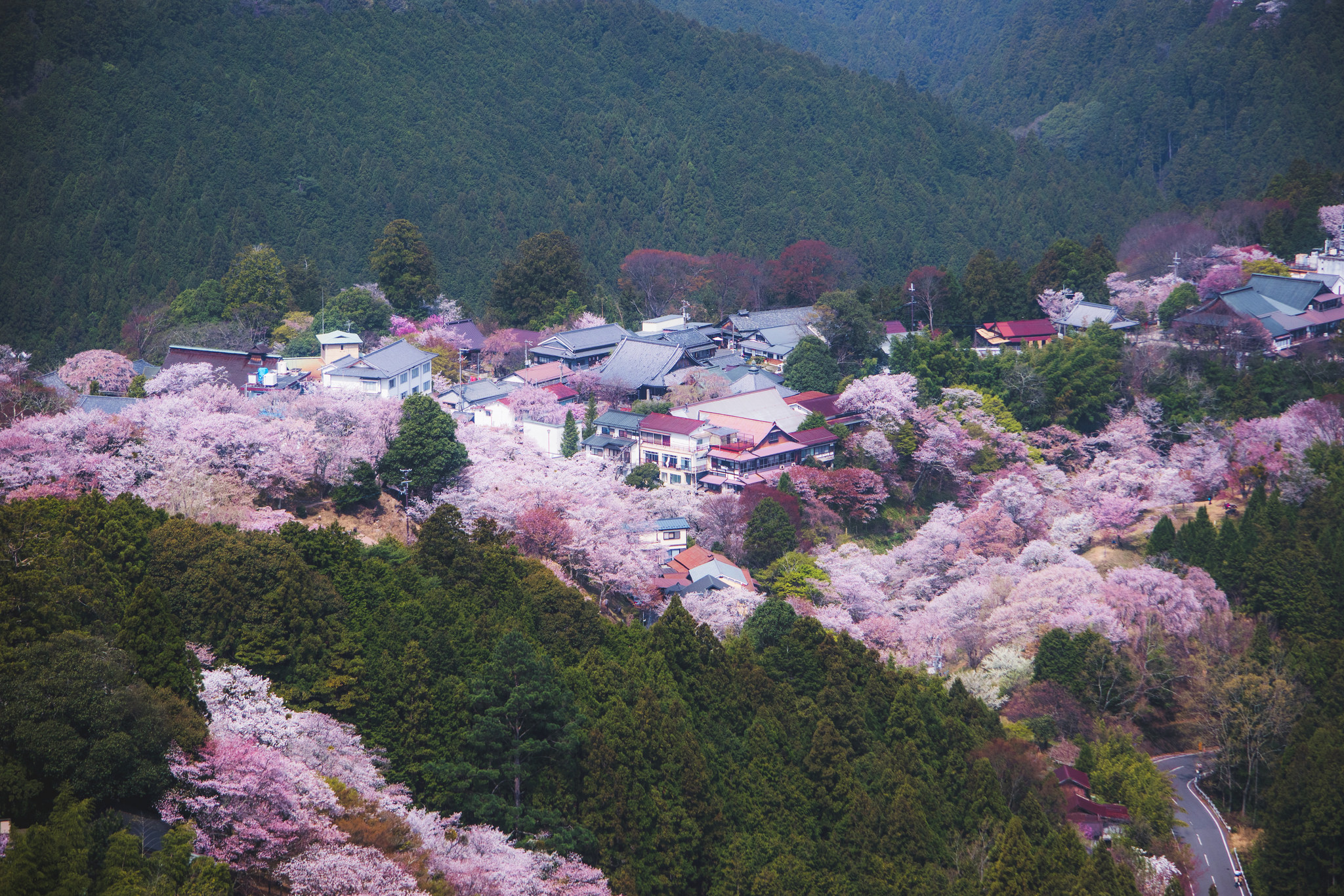 7 Beautiful Cherry Blossom Spots you shouldn't miss this Spring 2019 - Alvinology