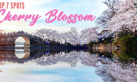 7 Beautiful Cherry Blossom Spots you shouldn't miss this Spring 2019