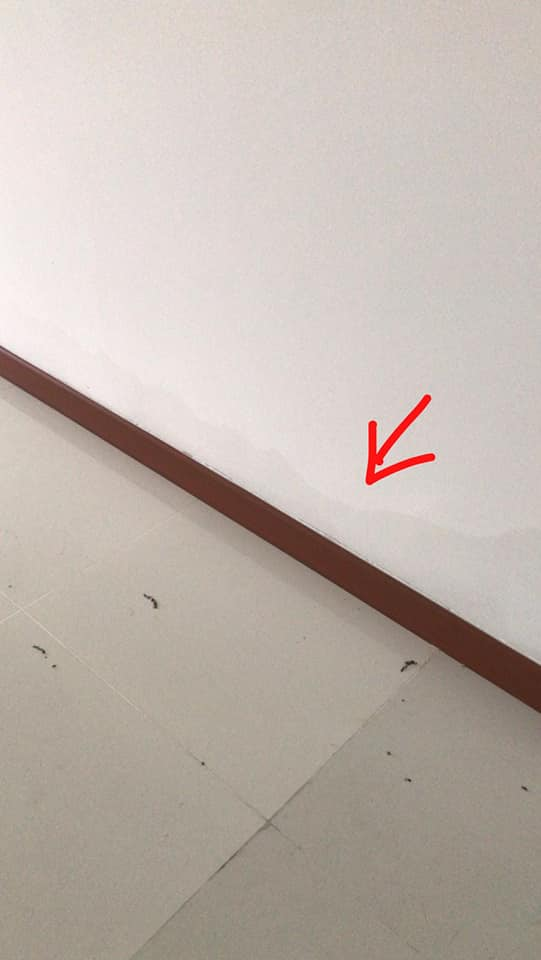 What did the HDB say about this flat that's full of mold and water stains? - Alvinology