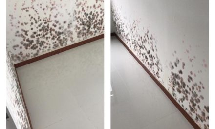 What did the HDB say about this flat that's full of mold and water stains?