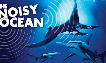 S.E.A. Aquarium returns with the annual conservation-themed festival – Ocean Fest: The Noisy Ocean