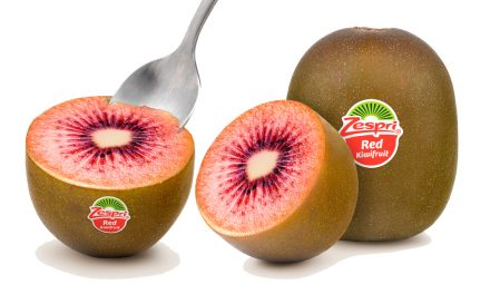 Zespri Red Kiwifruit returns to Singapore for a limited time only