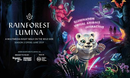 Rainforest Lumina back at the Singapore Zoo for season two