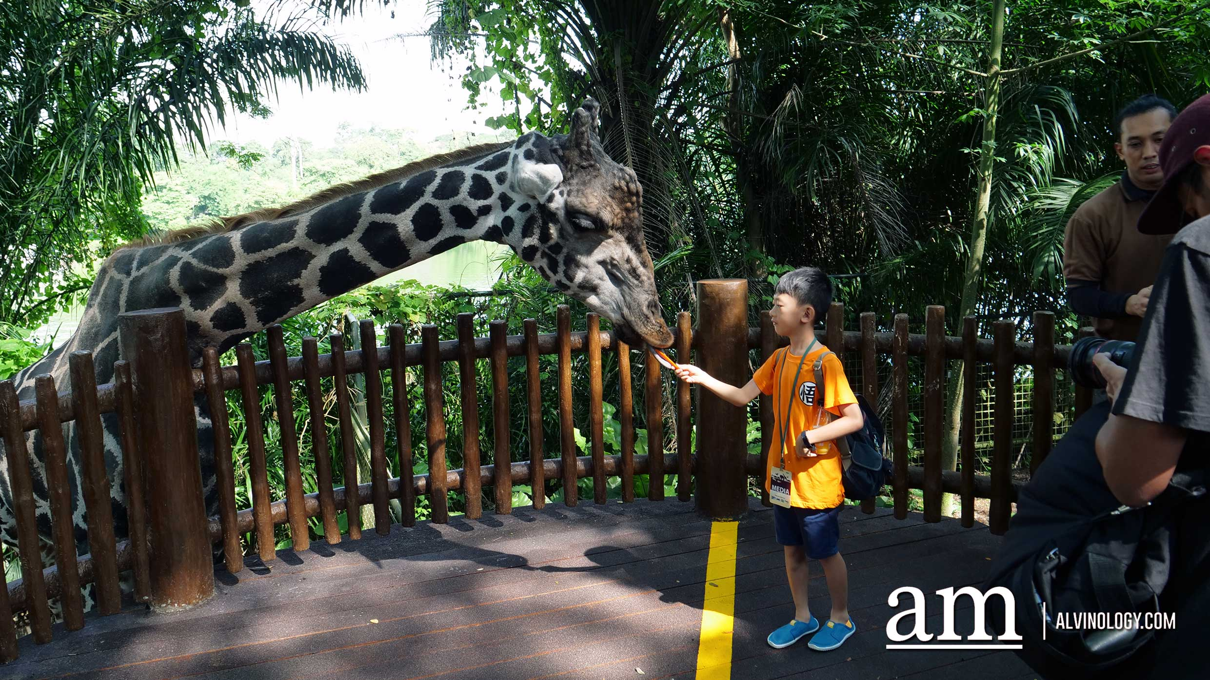 Experience Disney's The Lion King in real-life at the Singapore Zoo and Night Safari - Alvinology