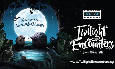 [PROMO INSIDE] Discover Incredible Oddballs – Here's a list of activities to expect at Night Safari from November till December