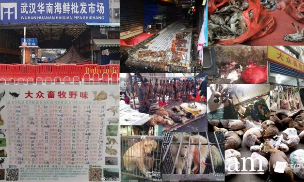 What the Wuhan Huanan Seafood Wholesale Market was like before the outbreak [WARNING: NSFW]