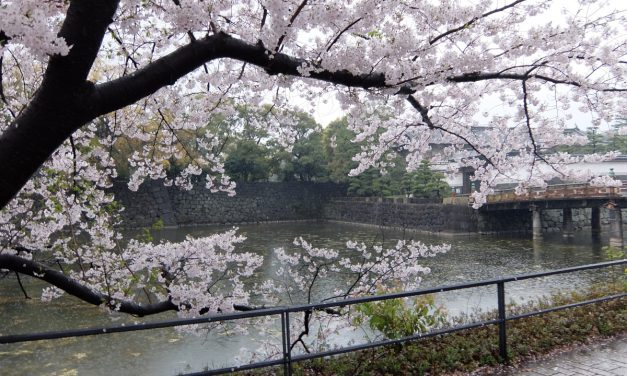 5 off-the-beaten-path cherry blossom tours to consider