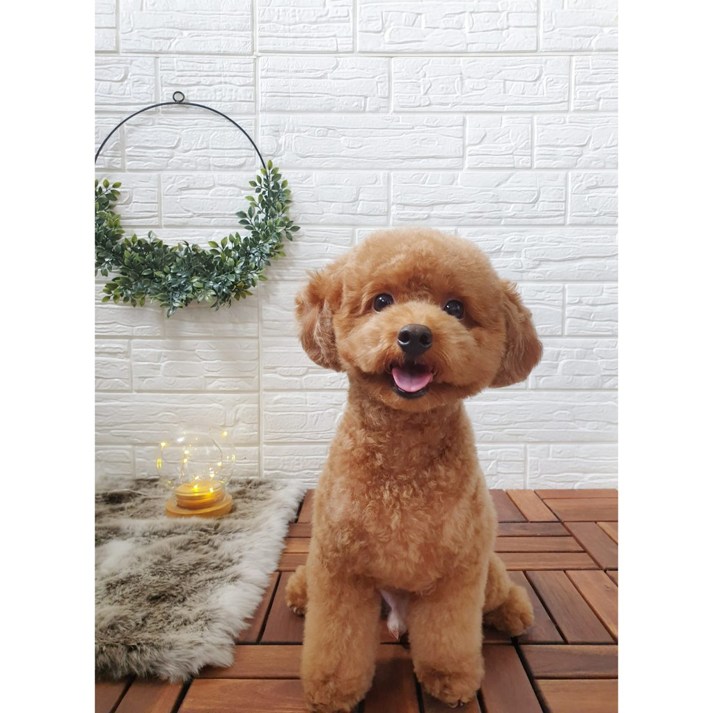 [EYES HERE] Pets Sale is happening on Shopee this 28 April offering up to 65% off on pet products - Alvinology