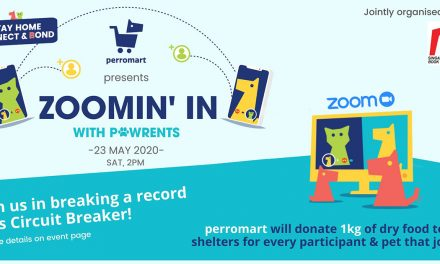 Calling all pet owners to join the 23 May perromart – 1kg of food will be donated to animal shelters for every participant!