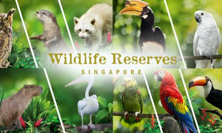 Wildlife Reserves Singapore launches more customized virtual experiences for all animal-lovers