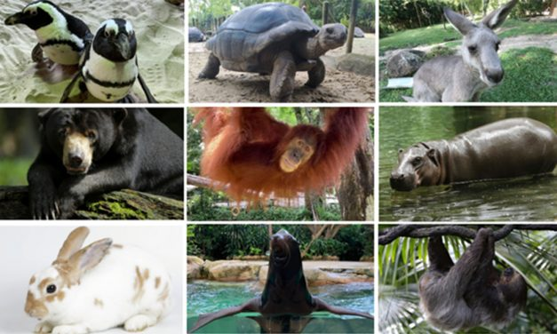 Wildlife Reserves Singapore launches its 'Adopt an Animal' Programme – adopt an animal of your choice!