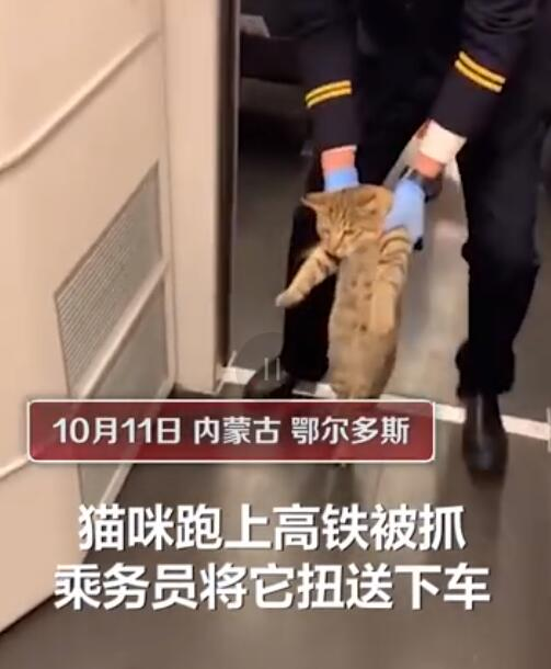 Free-rider cat gets escorted off train in China; reminds us of the two viral cats who tried to enter a Japanese museum - Alvinology