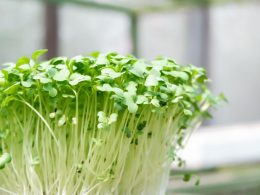 All you need to know about the best Substitute for Bean Sprouts - Alvinology